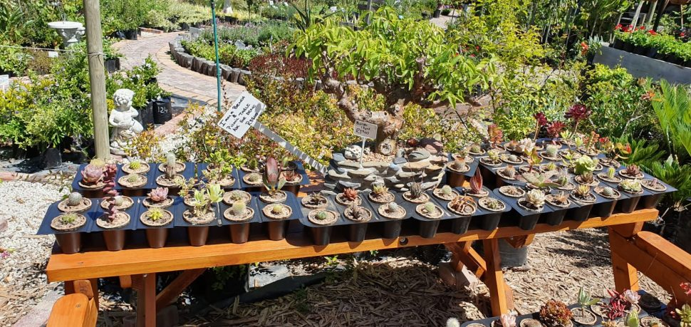 Sabrina Love youth cultivating succulents in biodegradable containers 6