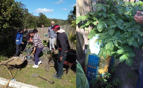 Feed your Family  from your backyard - A Mungo Move initiative 4